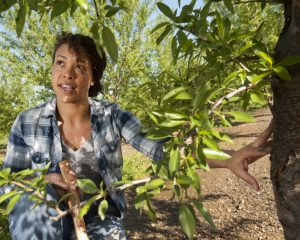 Leslie Holland, a PhD candidate in plant pathology, talks about the work she does in almond orchards on Tuesday March 15, 2016 at UC Davis.